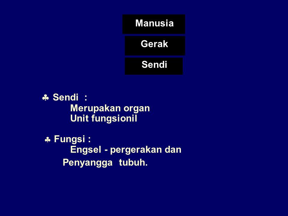  Sendi : Manusia Gerak Sendi Merupakan organ Unit fungsionil