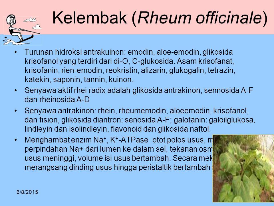 Kelembak (Rheum officinale)