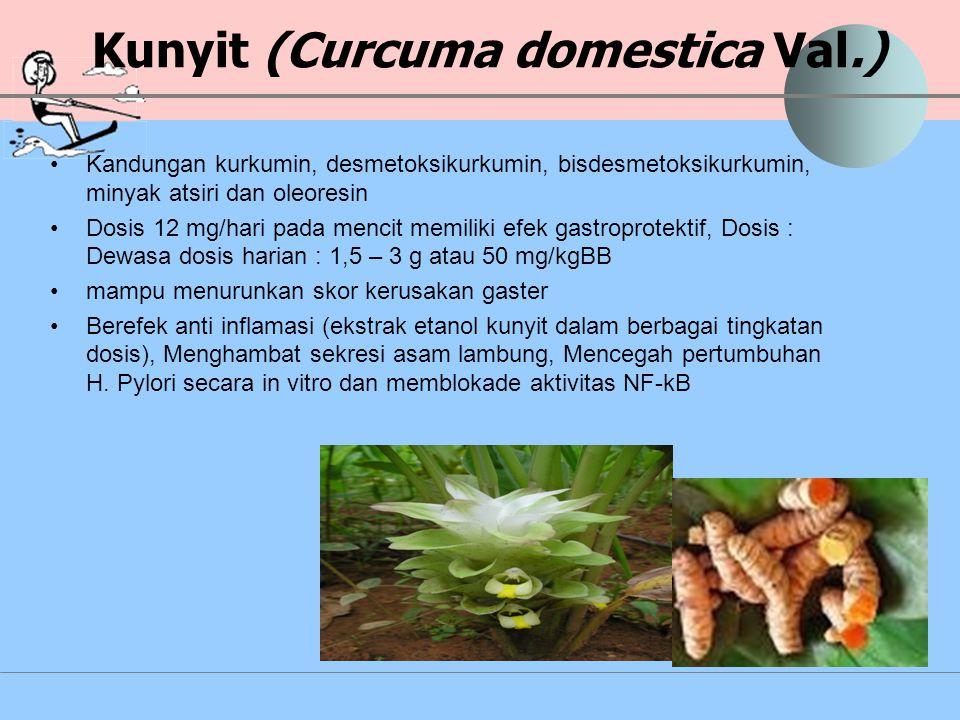 Kunyit (Curcuma domestica Val.)