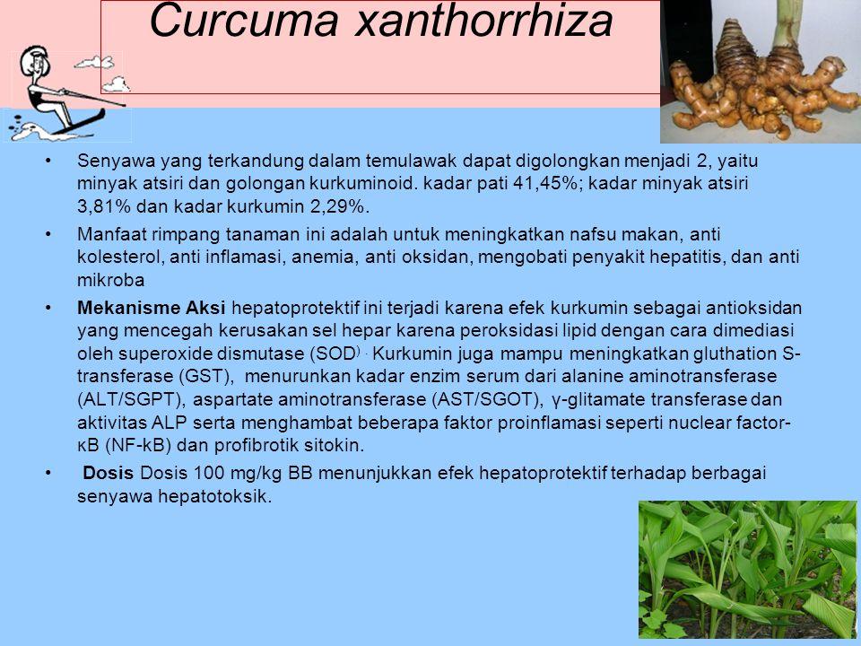 Curcuma xanthorrhiza