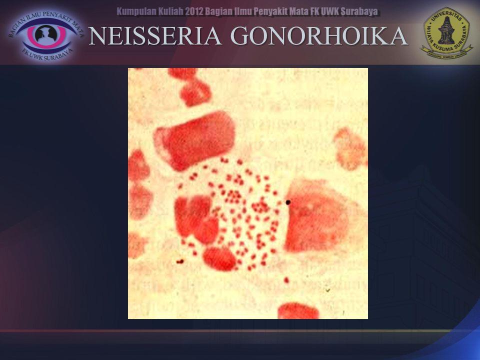NEISSERIA GONORHOIKA