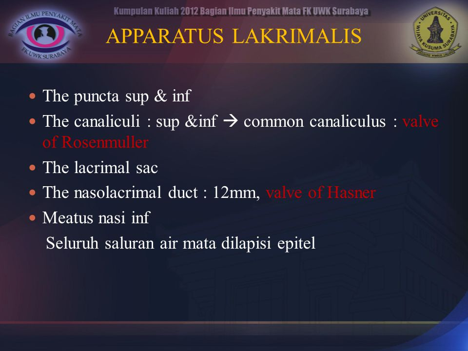 APPARATUS LAKRIMALIS The puncta sup & inf