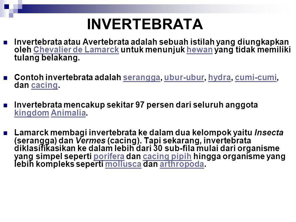 INVERTEBRATA
