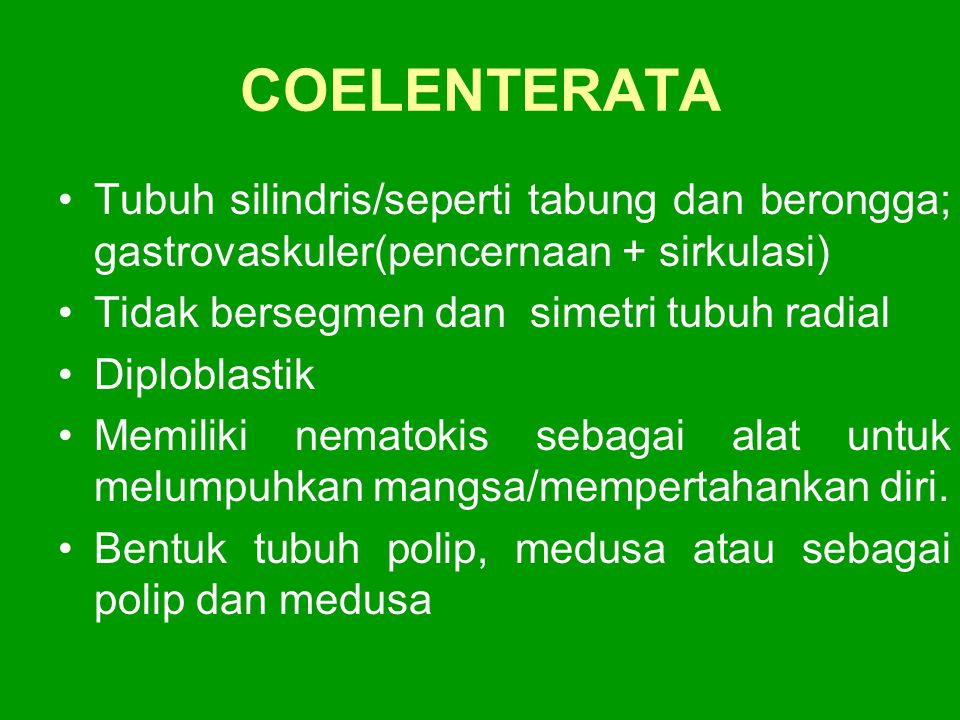 COELENTERATA Tubuh silindris/seperti tabung dan berongga; gastrovaskuler(pencernaan + sirkulasi) Tidak bersegmen dan simetri tubuh radial.