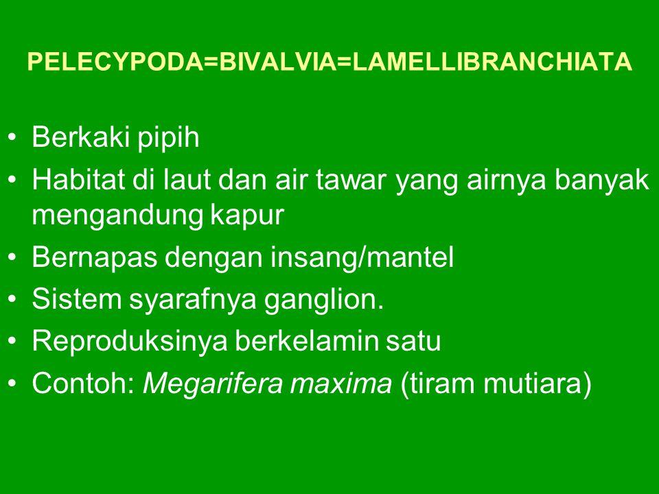 PELECYPODA=BIVALVIA=LAMELLIBRANCHIATA