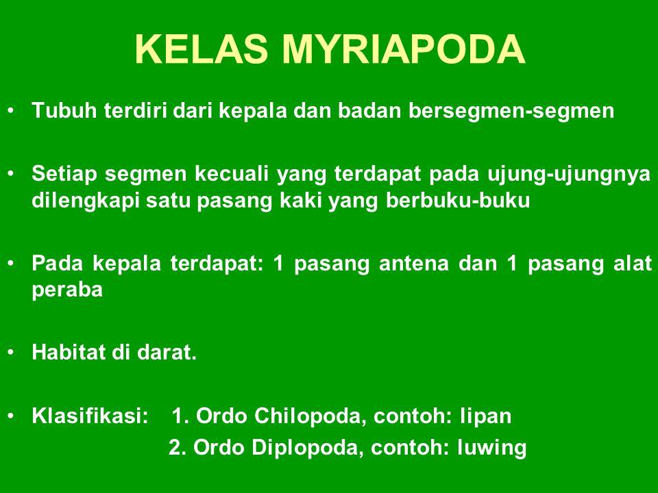 KELAS MYRIAPODA Tubuh terdiri dari kepala dan badan bersegmen-segmen