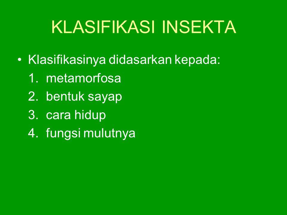 KLASIFIKASI INSEKTA Klasifikasinya didasarkan kepada: 1. metamorfosa