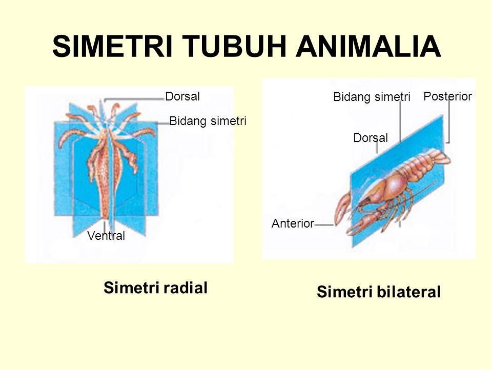 SIMETRI TUBUH ANIMALIA
