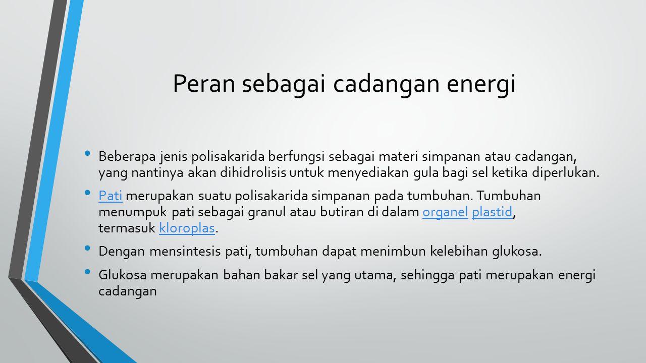 Peran sebagai cadangan energi