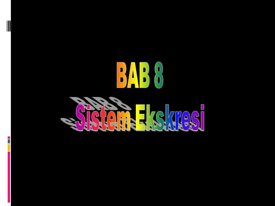 BAB 8 Sistem Ekskresi