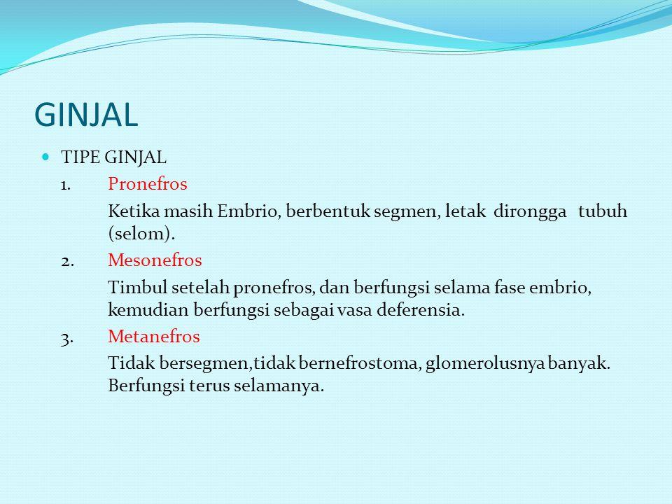 GINJAL TIPE GINJAL 1. Pronefros