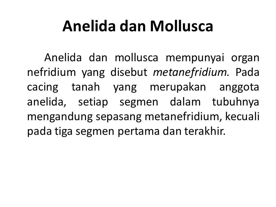 Anelida dan Mollusca