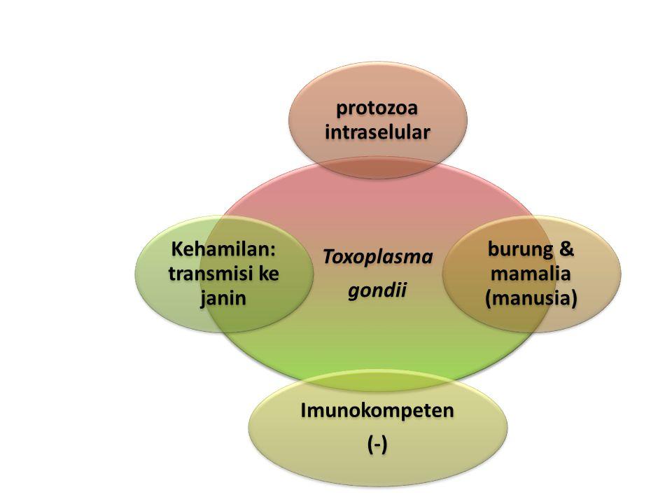 protozoa intraselular