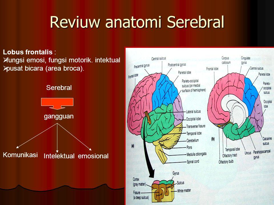 Reviuw anatomi Serebral