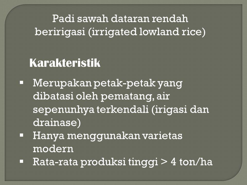 Padi sawah dataran rendah beririgasi (irrigated lowland rice)