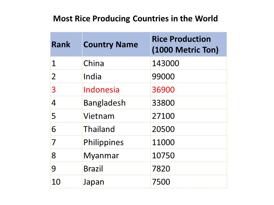 Most Rice Producing Countries in the World