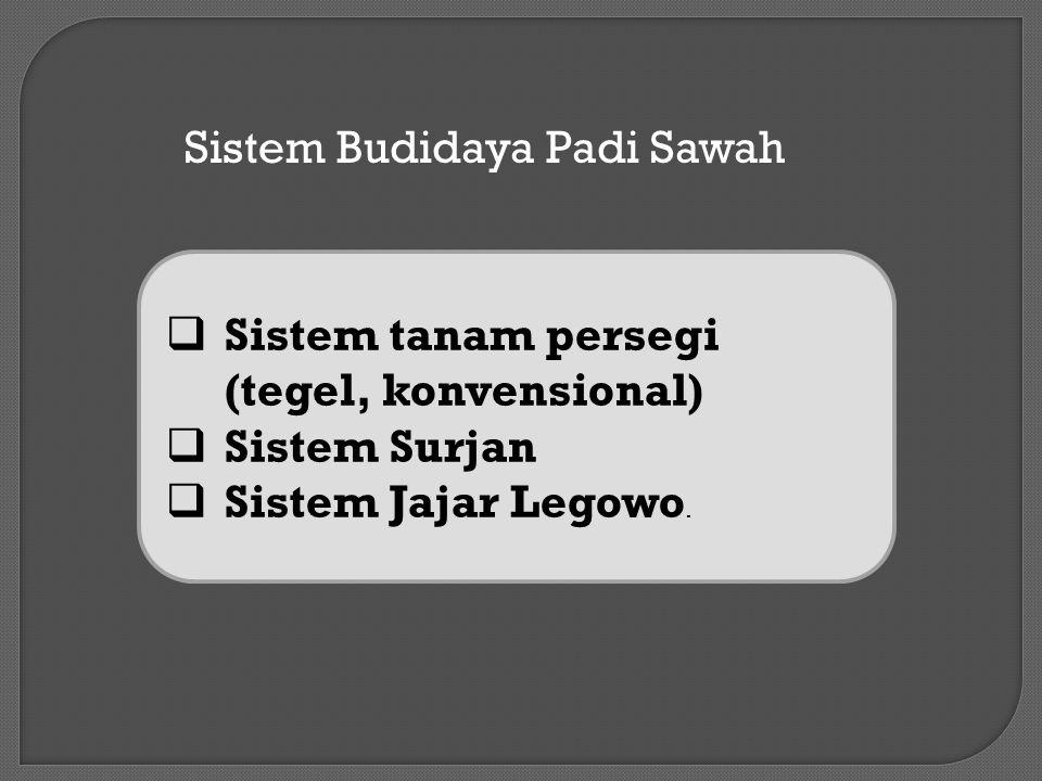 Sistem Budidaya Padi Sawah