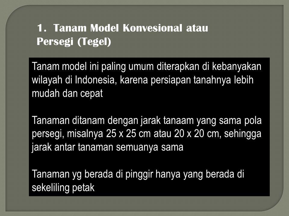 1. Tanam Model Konvesional atau Persegi (Tegel)