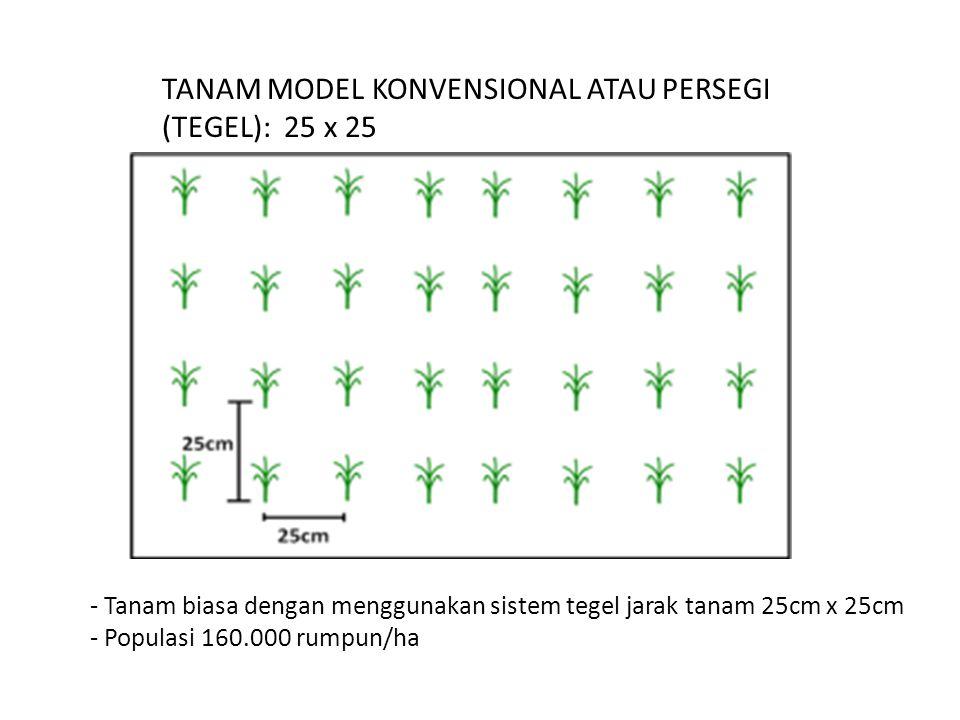 TANAM MODEL KONVENSIONAL ATAU PERSEGI (TEGEL): 25 x 25