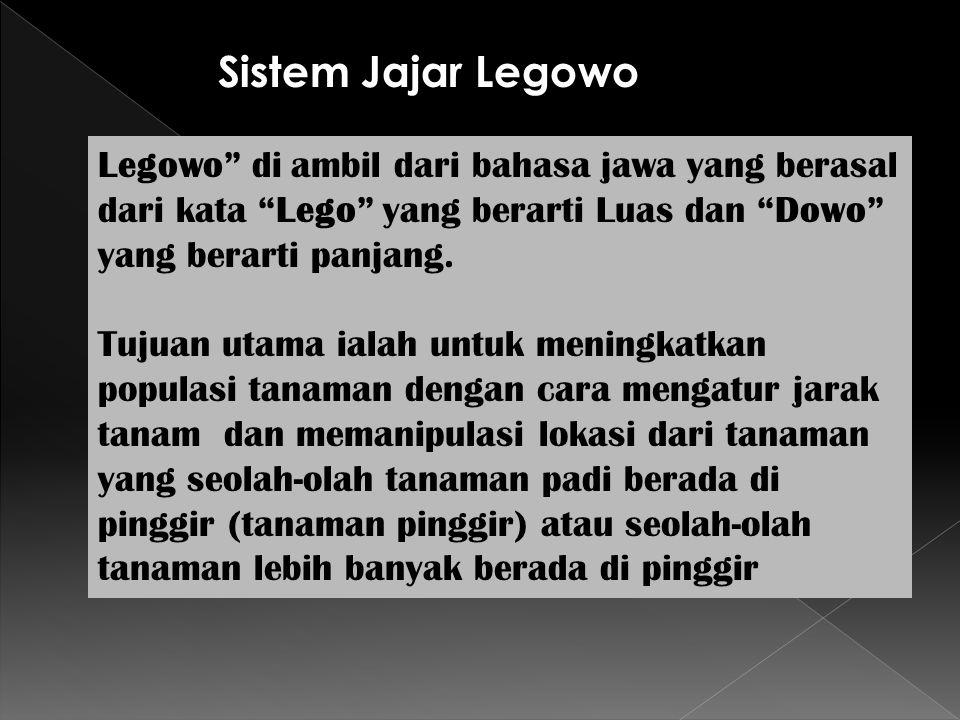 Sistem Jajar Legowo Legowo di ambil dari bahasa jawa yang berasal dari kata Lego yang berarti Luas dan Dowo yang berarti panjang.