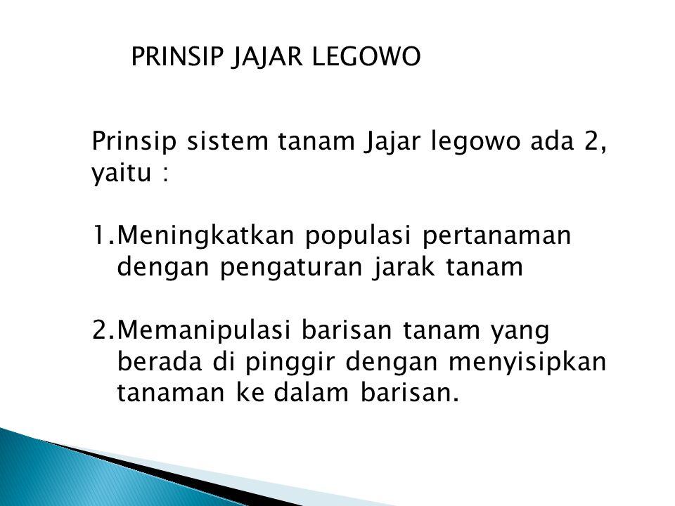 PRINSIP JAJAR LEGOWO Prinsip sistem tanam Jajar legowo ada 2, yaitu : Meningkatkan populasi pertanaman dengan pengaturan jarak tanam.
