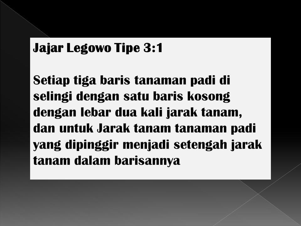 Jajar Legowo Tipe 3:1