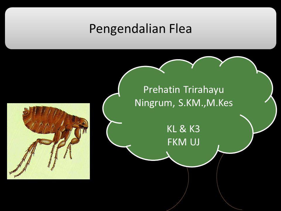 Prehatin Trirahayu Ningrum, S.KM.,M.Kes