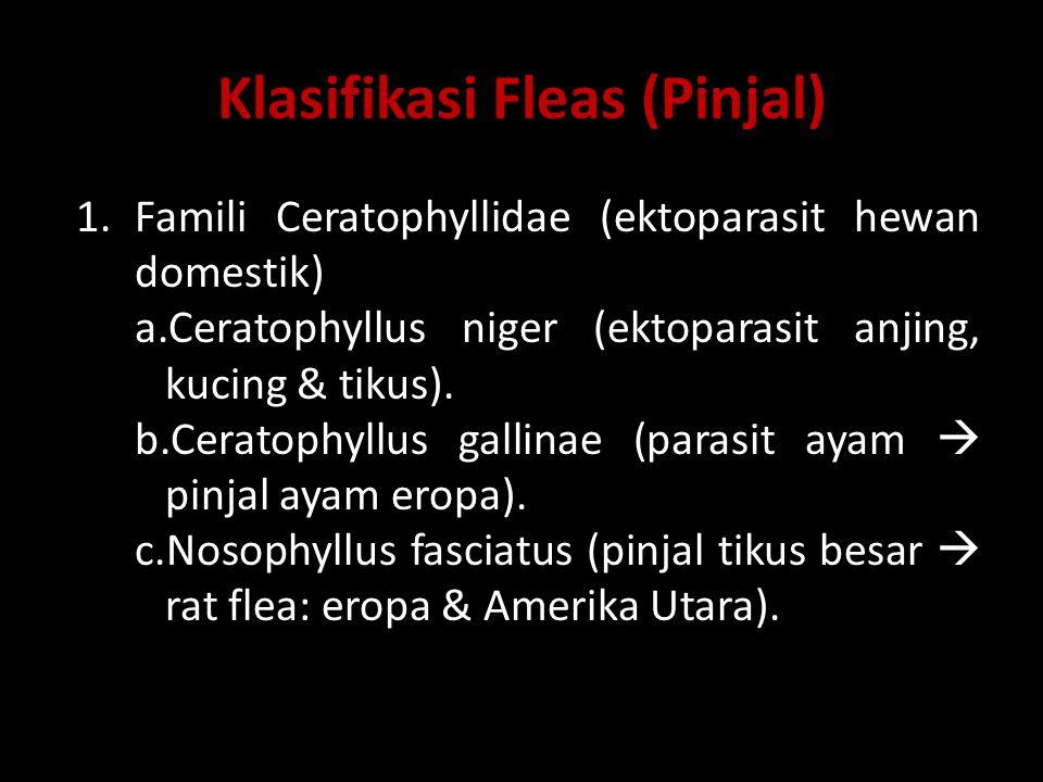 Klasifikasi Fleas (Pinjal)