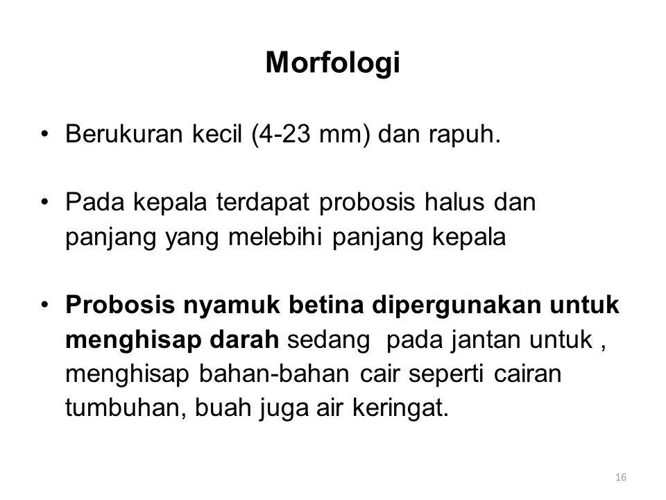 Morfologi Berukuran kecil (4-23 mm) dan rapuh.