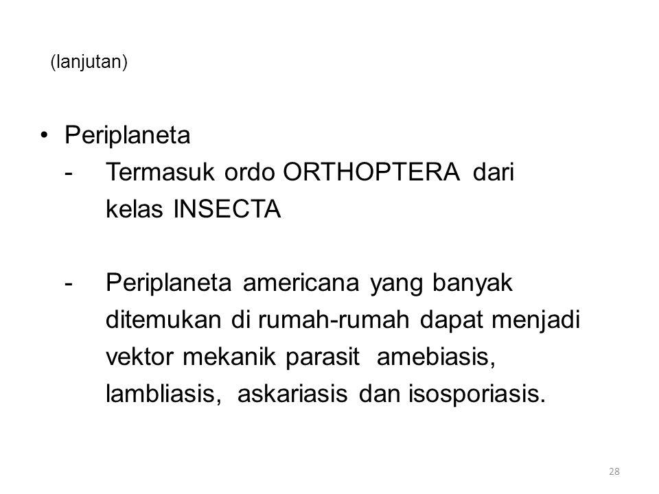 - Termasuk ordo ORTHOPTERA dari kelas INSECTA
