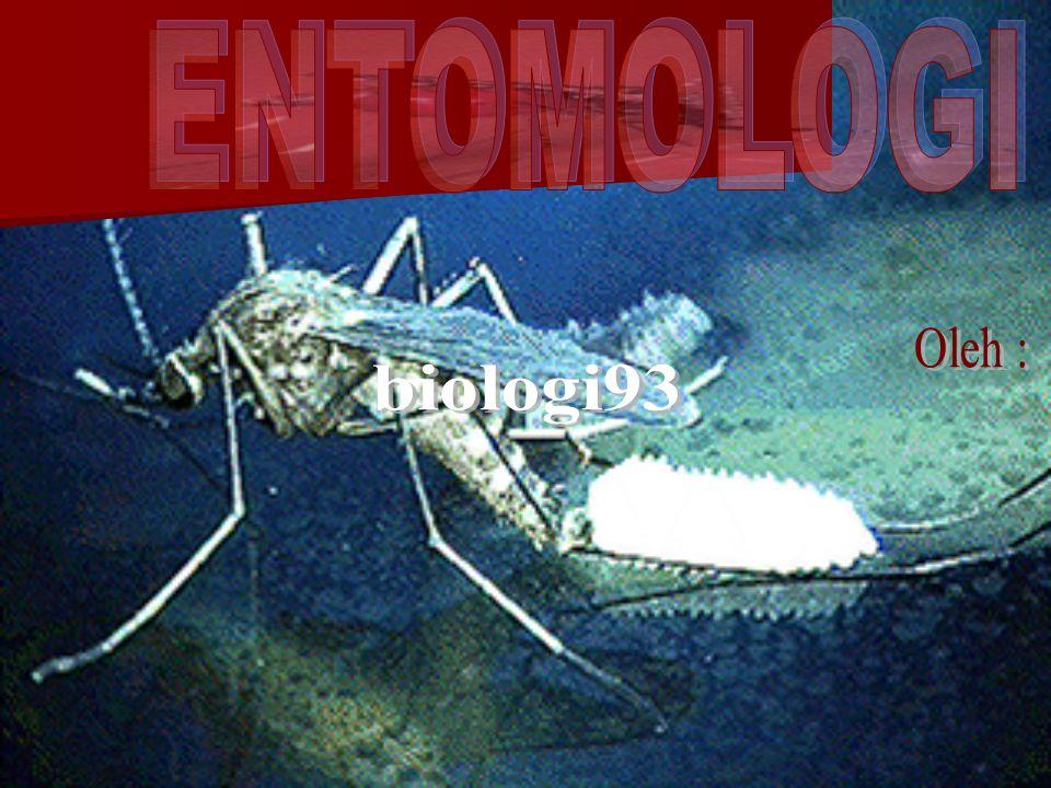 ENTOMOLOGI Oleh : biologi93