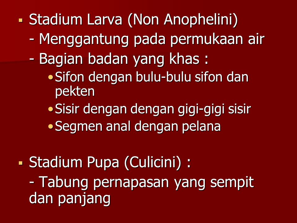 Stadium Larva (Non Anophelini) - Menggantung pada permukaan air