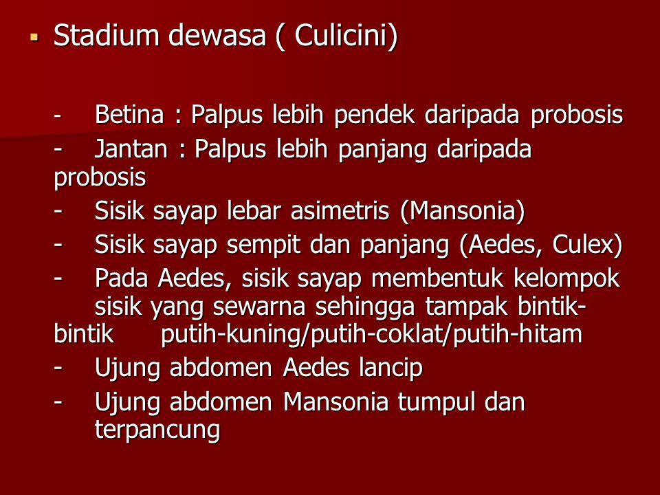 Stadium dewasa ( Culicini)