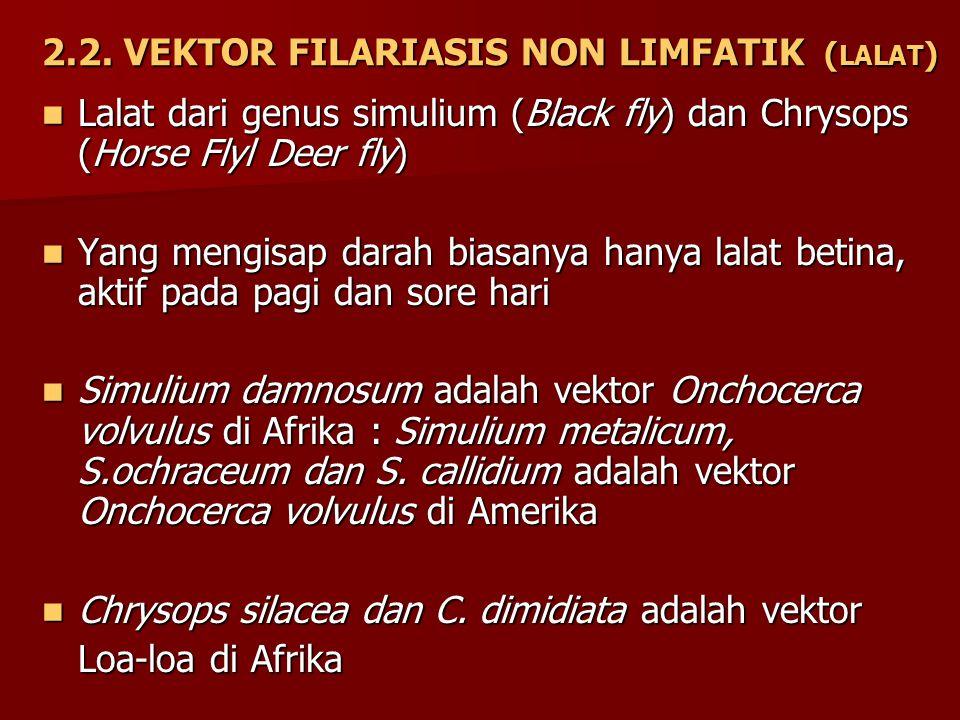 2.2. VEKTOR FILARIASIS NON LIMFATIK (LALAT)