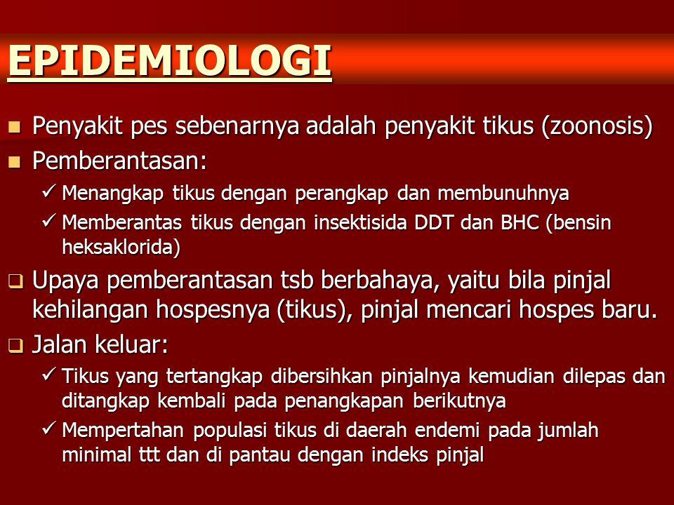 EPIDEMIOLOGI Penyakit pes sebenarnya adalah penyakit tikus (zoonosis)