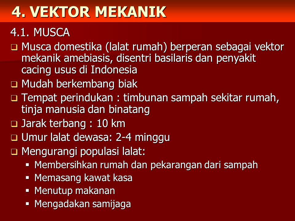4. VEKTOR MEKANIK 4.1. MUSCA.