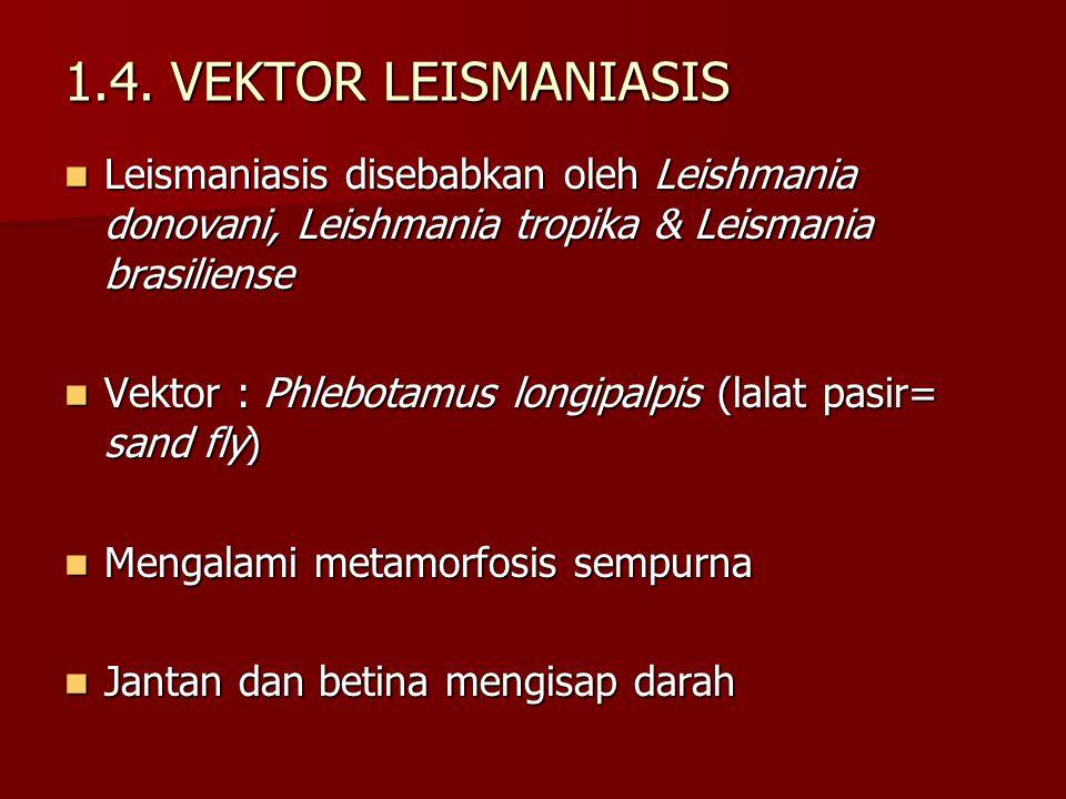 1.4. VEKTOR LEISMANIASIS Leismaniasis disebabkan oleh Leishmania donovani, Leishmania tropika & Leismania brasiliense.