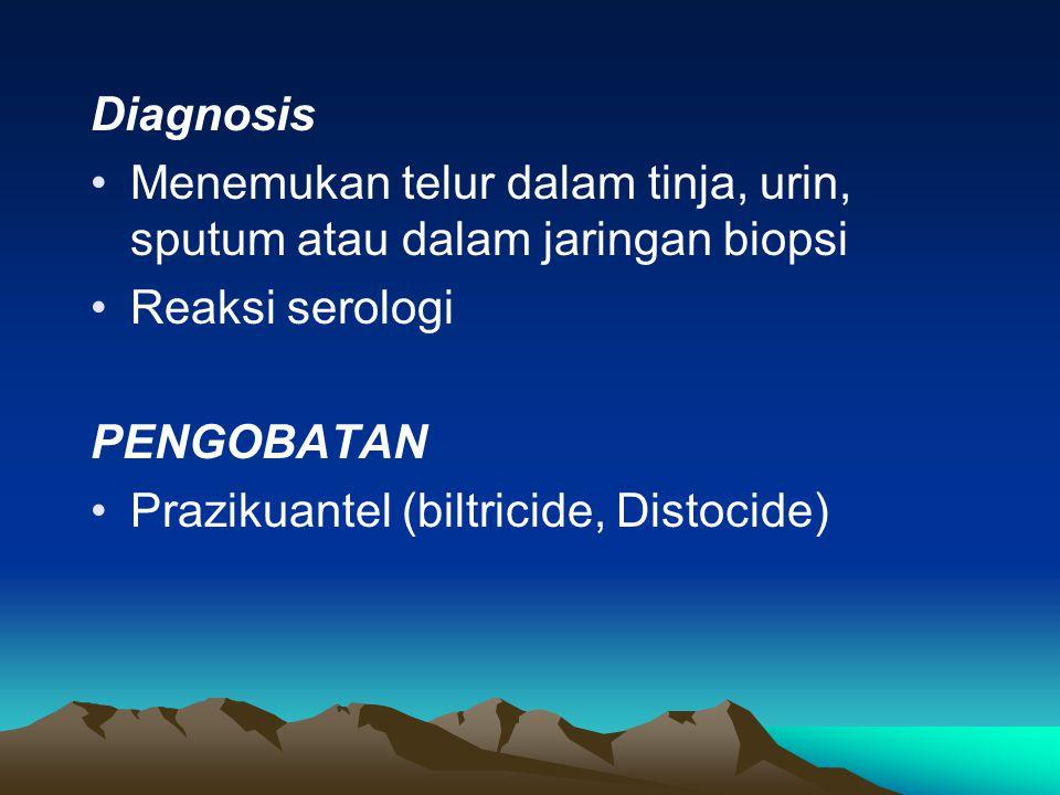 Diagnosis Menemukan telur dalam tinja, urin, sputum atau dalam jaringan biopsi. Reaksi serologi. PENGOBATAN.