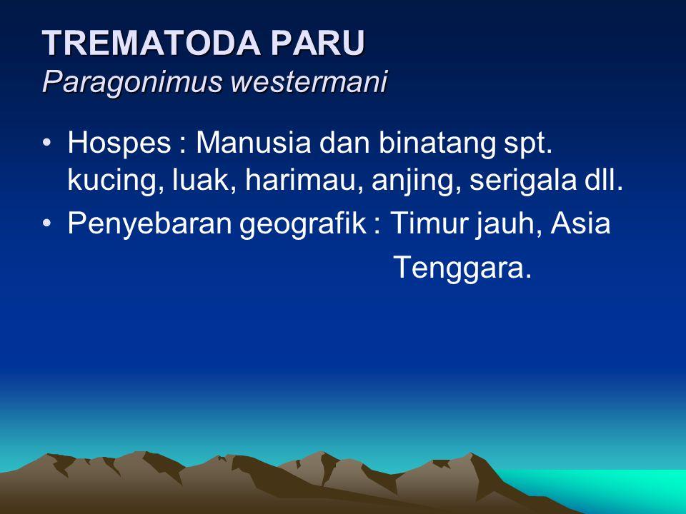 TREMATODA PARU Paragonimus westermani