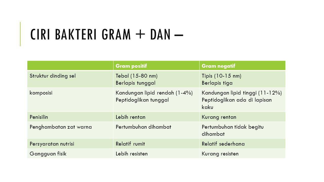 Ciri bakteri gram + dan –
