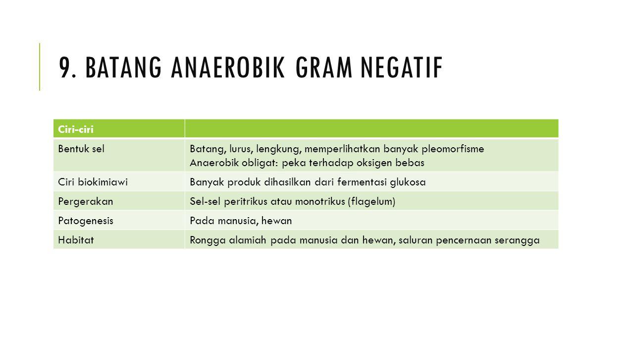 9. Batang anaerobik gram negatif