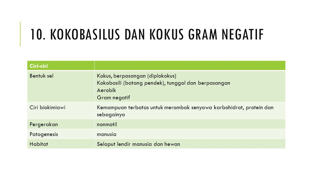 10. Kokobasilus dan kokus gram negatif
