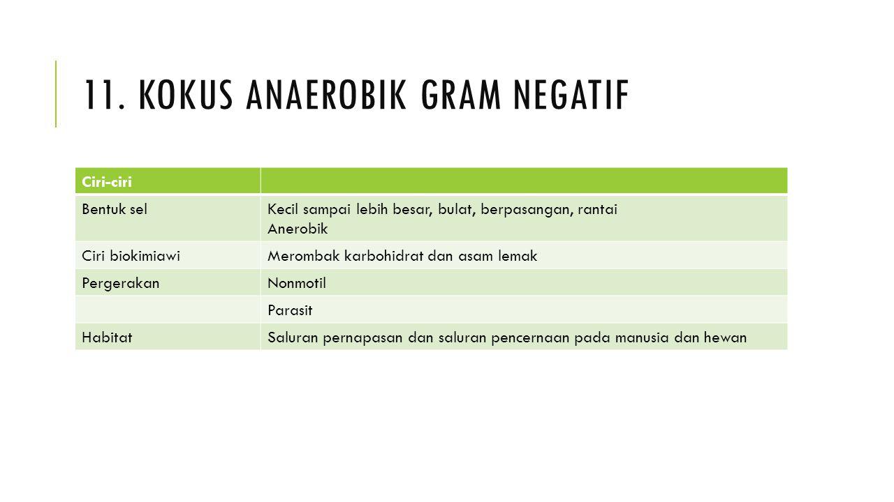 11. Kokus anaerobik gram negatif