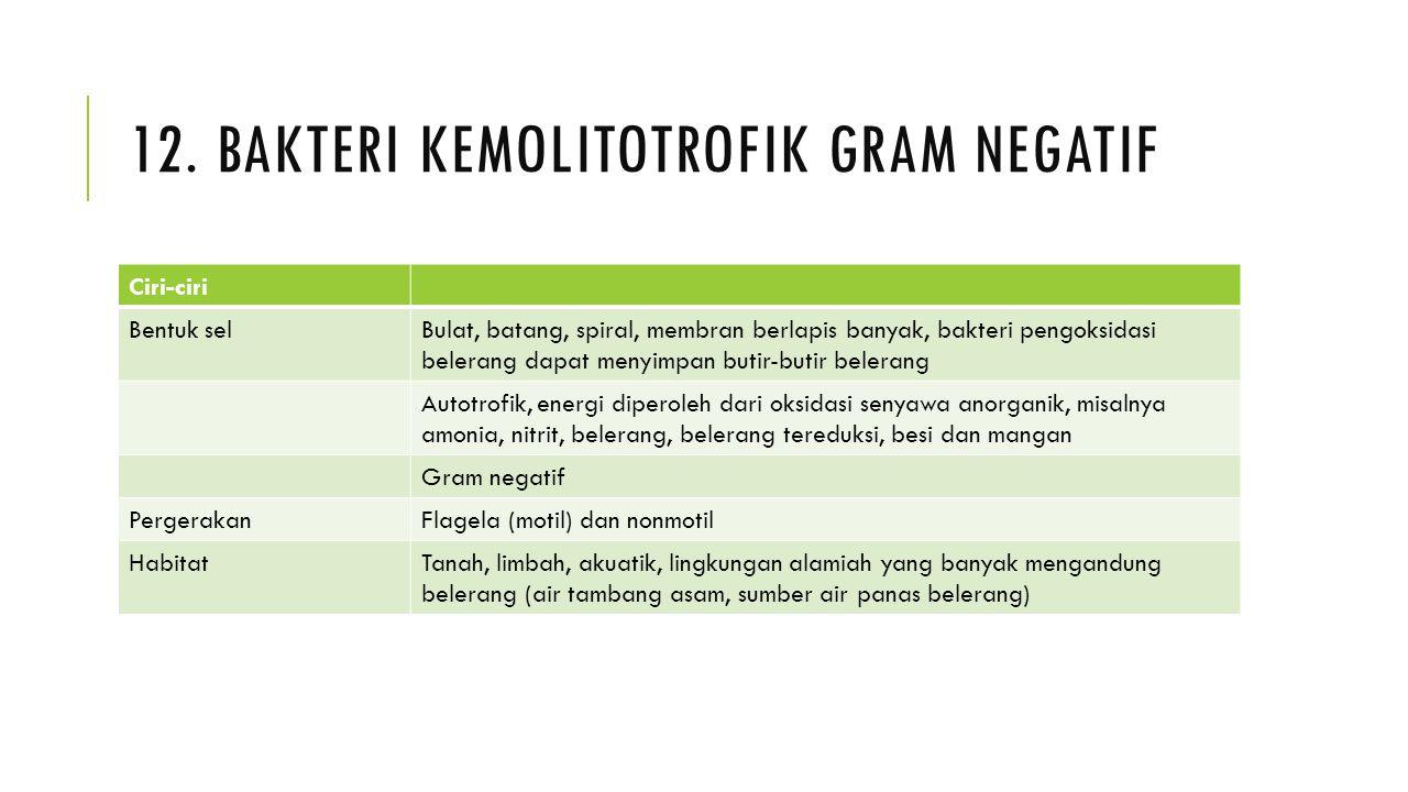 12. Bakteri kemolitotrofik gram negatif