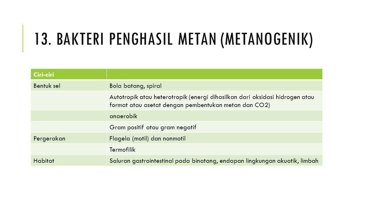 13. Bakteri penghasil metan (metanogenik)