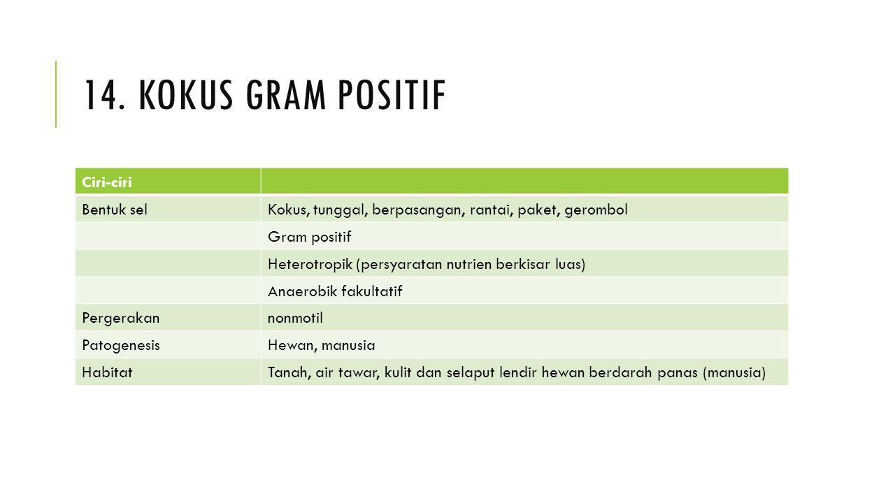 14. Kokus gram positif Ciri-ciri Bentuk sel