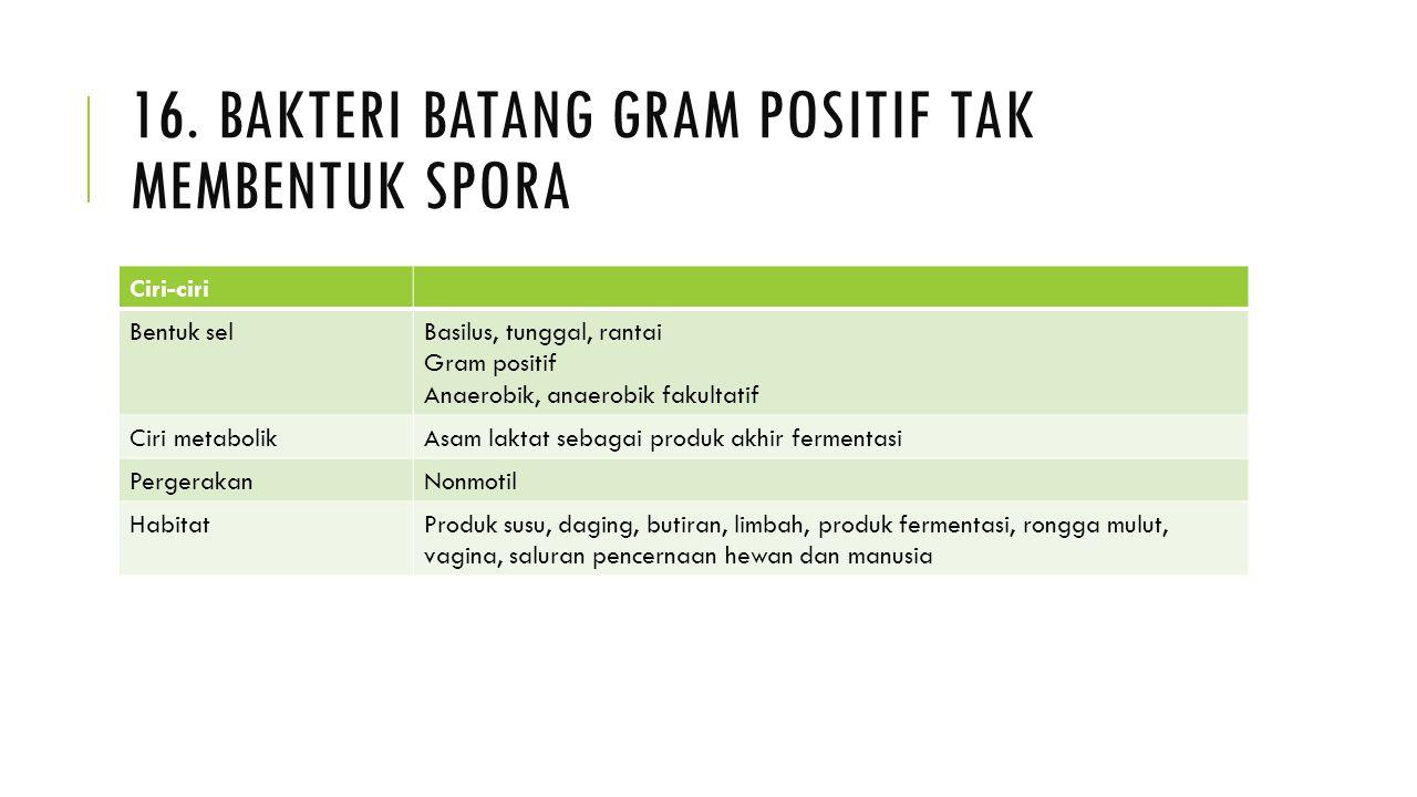 16. Bakteri batang gram positif tak membentuk spora