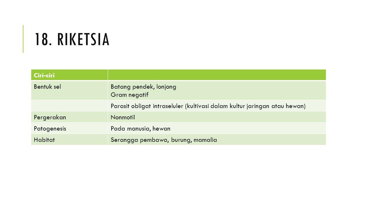 18. riketsia Ciri-ciri Bentuk sel Batang pendek, lonjong Gram negatif