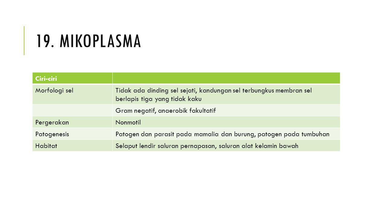 19. mikoplasma Ciri-ciri Morfologi sel