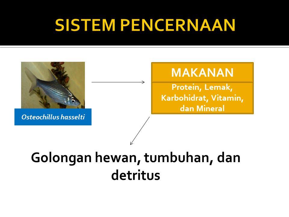 SISTEM PENCERNAAN Golongan hewan, tumbuhan, dan detritus MAKANAN